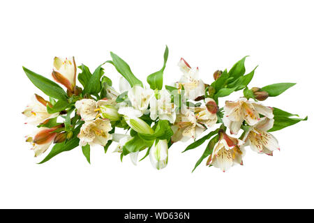 White alstroemeria flowers branch on white background isolated close up, lily flowers bunch for decorative border, holiday poster, design element - Stock Photo