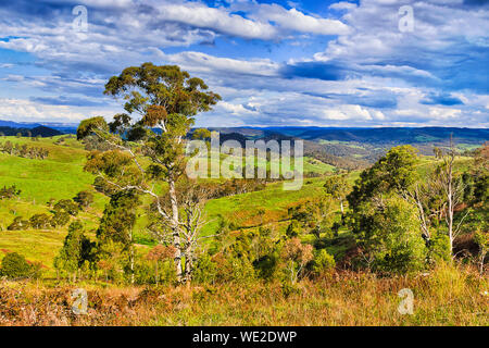 Lush green cultivated grazing pastsures on cattle growing properties in Blue Mountains of Australia on a sunny day. - Stock Photo