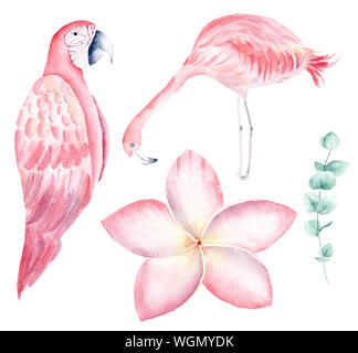 Tropical nature hand drawn watercolor raster illustration set. Parrot and flamingo isolated pack. Exotic flowers, orchid and liana aquarelle drawing. - Stock Photo