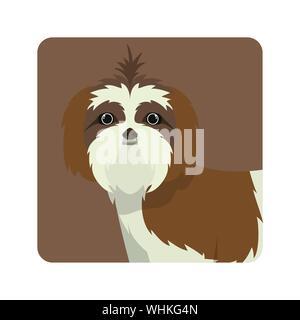 cute shih tzu dog on white background - Stock Photo