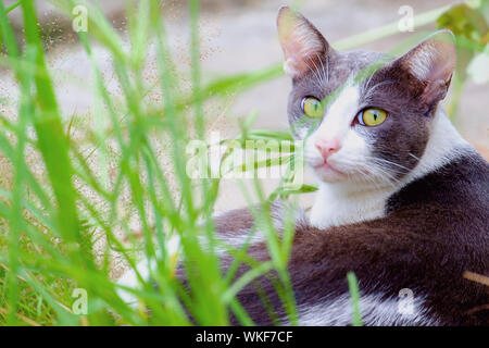 Cutely cat lying in the green grass - Stock Photo