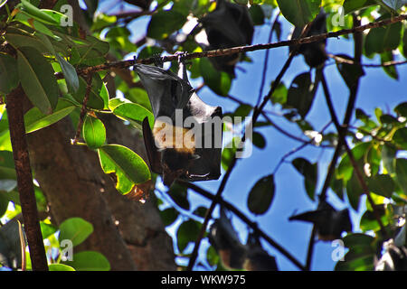 Walk around Cairns city, Queensland, Australia - Stock Photo