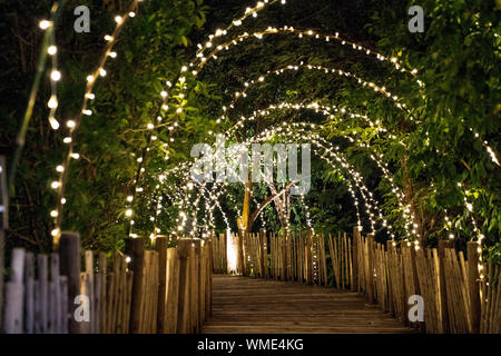 Lighting line hang on to the tree decor on to cave concept on the wood terrace walking way with darken around. - Stock Photo