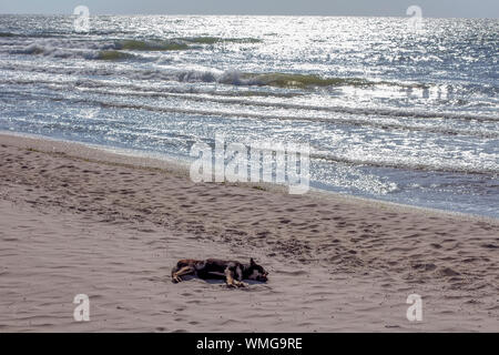 street dog sleeping on the sandy beach - Stock Photo