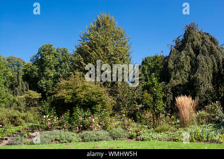 Concept flora : Flower scenery - Stock Photo