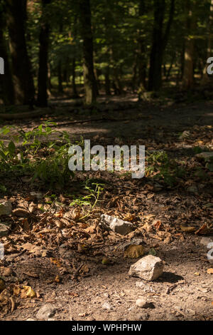 Detail of a ground in the forest in the summer. Enlighted stone, fallen leaves and sprouts of plants. Trees in the shadow in the background. Modra, Li - Stock Photo