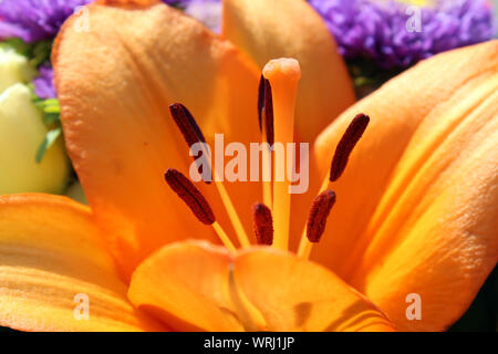 Lily pistil in a bouquet close up - Stock Photo