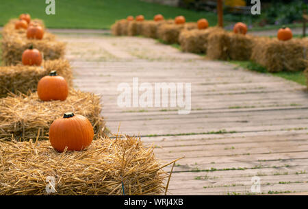 Pumpkins on straw bales as decoration near the wood pathway. Harvest festival decorations - Stock Photo