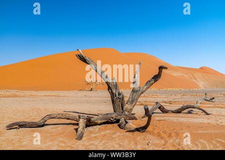 Dune 45, Sossusvlei, Namib-Naukluft National Park, Sesriem, Namibia - Stock Photo