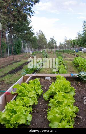 Raised vegetable garden - Stock Photo