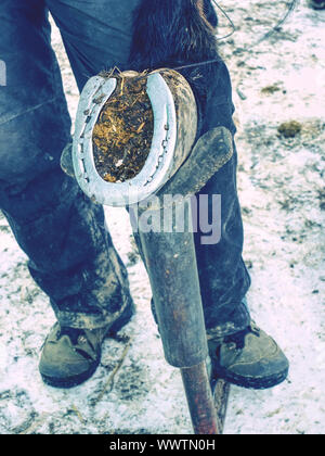 Horseshoes removing in details. Regular horse legs care done within winter time by skilled farrier. - Stock Photo