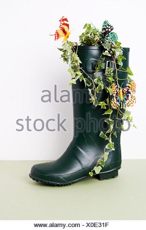 Ivy growing Wellington boot - Stock Photo