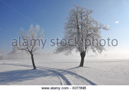 winterlandschaft - Stock Photo