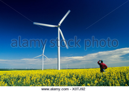 a farmer looks out over wind turbines in canola field near St. Leon, Manitoba, Canada. - Stock Photo