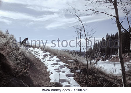 Dog sitting on snowy path - Stock Photo