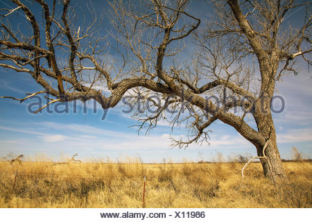 Landscape in Texas - Stock Photo