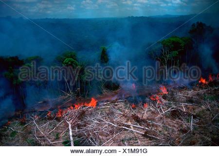Rain forest afire at Jarí Forestal, Pará, Brazil. - Stock Photo