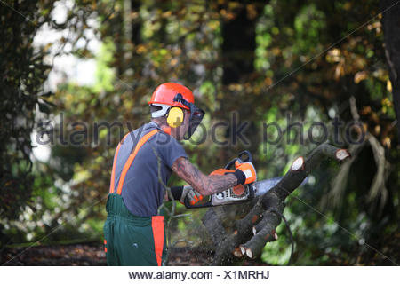 Forest workers or lumberjacks sawing - Stock Photo