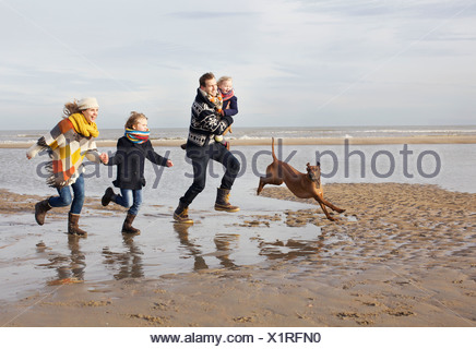 Mid adult parents with son, daughter and dog running on beach, Bloemendaal aan Zee, Netherlands - Stock Photo