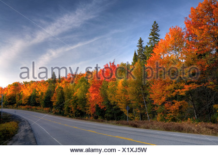 Highway 60 along Algonquin Park in fall, Ontario, Canada - Stock Photo