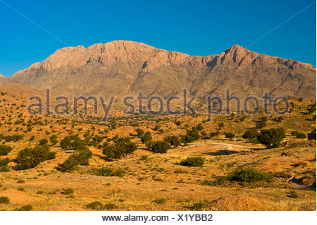 Typical mountain landscape with Argan Trees (Argania spinosa) in the evening light, Anti-Atlas Mountains, southern Morocco - Stock Photo