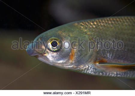 portrait of a nase - Stock Photo