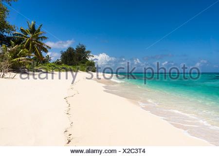 Seychelles, Northern Coral Group, Denis Island, Beach - Stock Photo