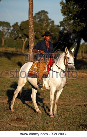 Pantanal Cowboy riding his Pantaneiro horse, Pantanal, Brazil, South America - Stock Photo