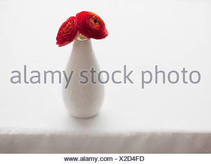 Red ranunculus in vase on table - Stock Photo