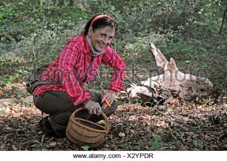 Woman, 50-55 years, picking mushrooms in the forest, mushrooms, basket, Iserlohn, Sauerland region, North Rhine-Westphalia - Stock Photo