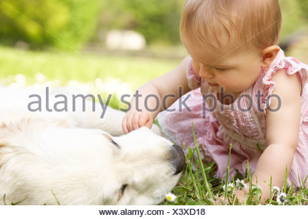 Baby Girl In Summer Dress Sitting In Field Petting Family Dog - Stock Photo