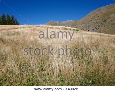 Grass Growing On Field Against Clear Blue Sky - Stock Photo