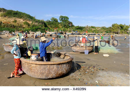 Fishermen with coracles, the typical round fishing boats on the beach of Mui Ne, South Vietnam, Southeast Asia - Stock Photo