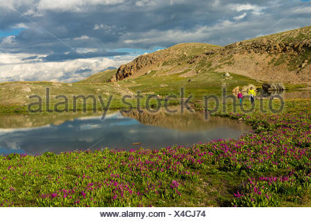A woman and her daughter hiking past wildflowers and tarn, San Juan National Forest,  Silverton, Colorado. - Stock Photo