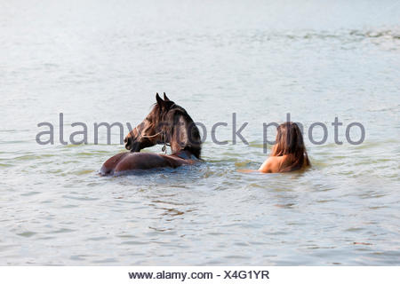 Welsh Cob Woman bay Welsh Pony swimming lake Germany - Stock Photo