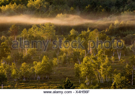 Morning mists in valley with leatherleaf bogs, pines and birches. Ontario - Stock Photo
