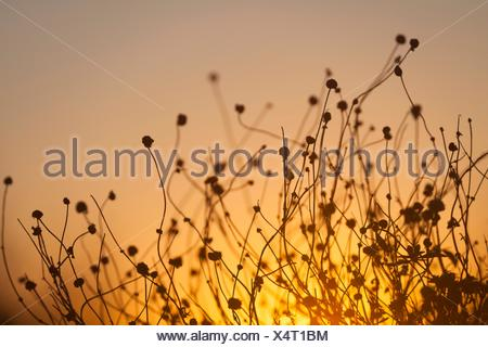 Sunset with plant - Stock Photo