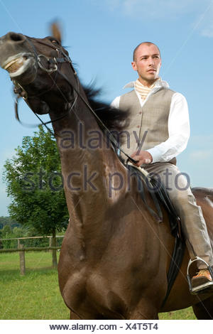 fashion horse sporty - Stock Photo
