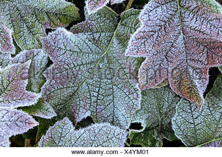 Natural Science, Small depth of sharpness, frost on plants - Stock Photo