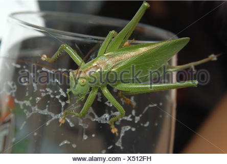macro close-up macro admission close up view animal insect creature grasshopper - Stock Photo