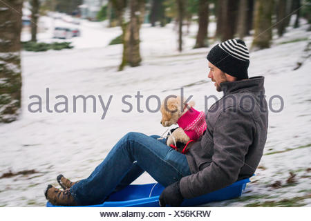Mid adult man sitting on a sledge with a golden retriever puppy dog - Stock Photo