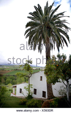 Tall palm tree beside traditional white Spanish villa in the country - Stock Photo
