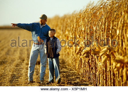 Agriculture - A farmer in his grain corn field with his son while inspecting the crop during harvest season / Central Iowa, USA. - Stock Photo