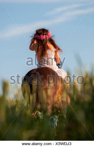 Welsh Cob Woman wearing floral wreath bay Welsh Pony riding through corn field Germany - Stock Photo