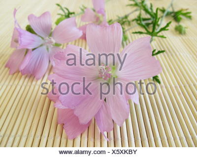ostrich, nosegay, blossoms, purple, ostrich, mallow, bleed, savage, haggardly, - Stock Photo