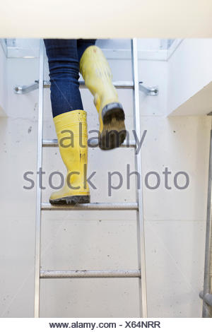 Low section of person wearing boots while moving up ladder - Stock Photo