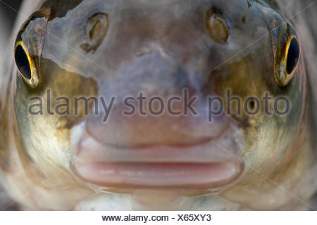 Frontal portrait of an adult nase - Stock Photo