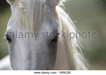 Close up of horses eyes - Stock Photo