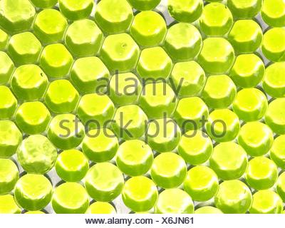 objects colour flower plant floral water blue tool object objects liquid thing - Stock Photo