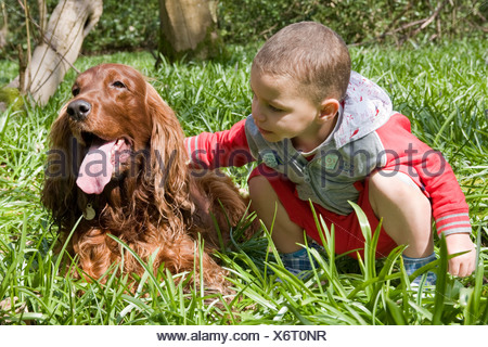 little boy petting irish setter dog in woods - Stock Photo